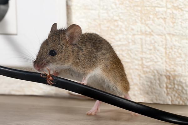 Roanoke Rat Control